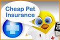 cheap pet insurance