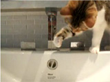 Cat fun video: I love water